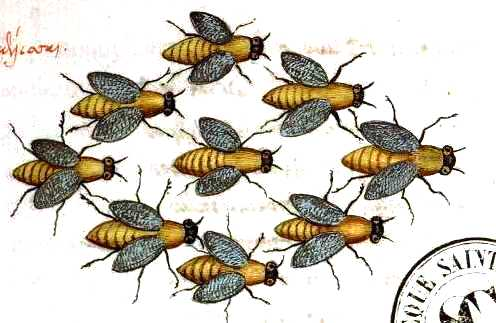 Animal-Insect-Bees-Medieval-Swarm